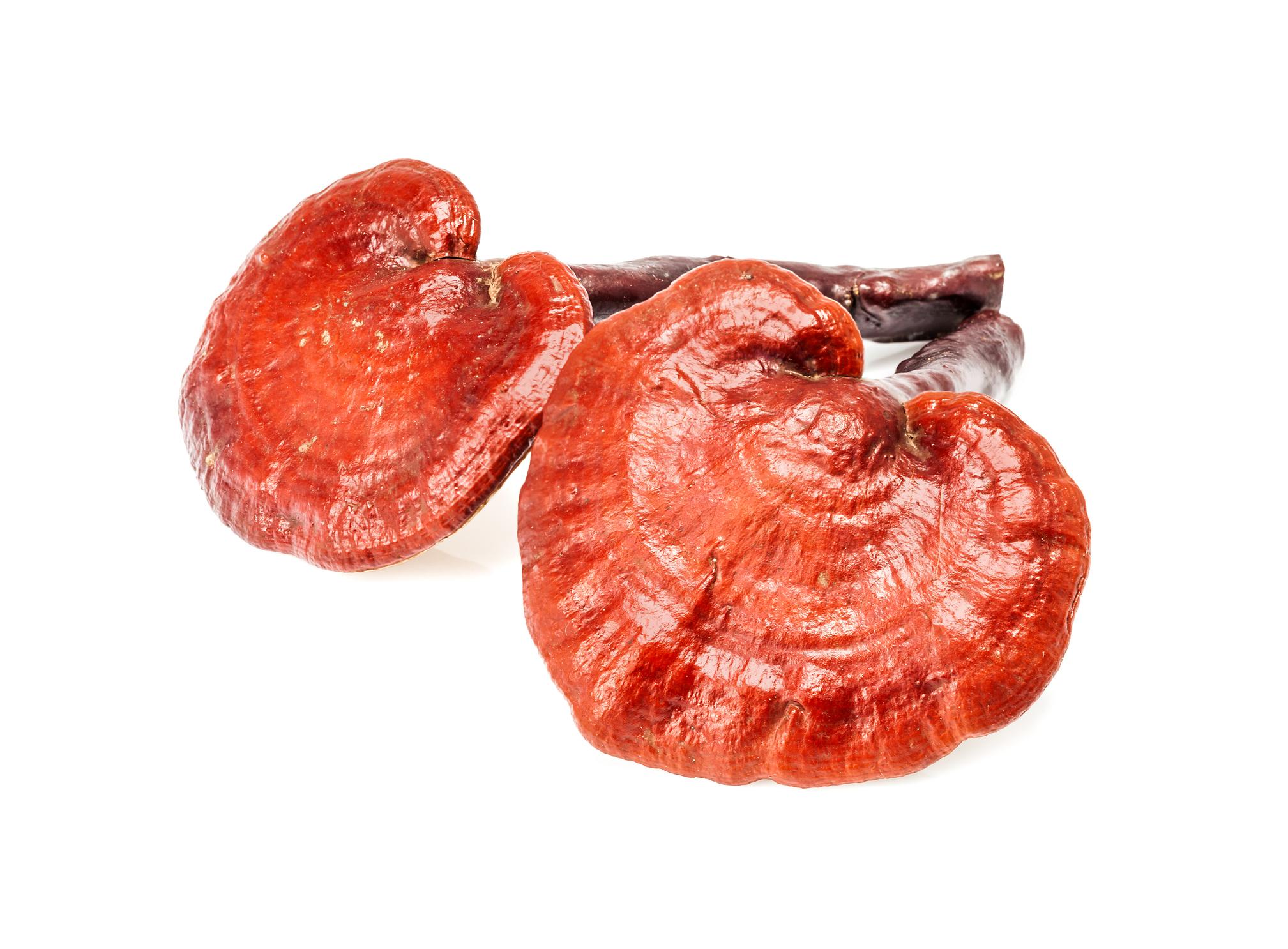 Reishi, Cordyceps, Hericium – Vitalpilze, das neue Superfood